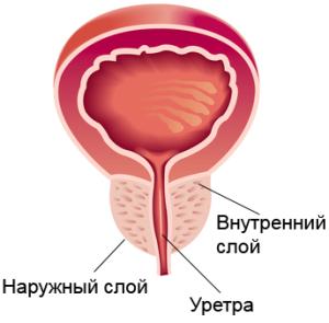 prostata(2)