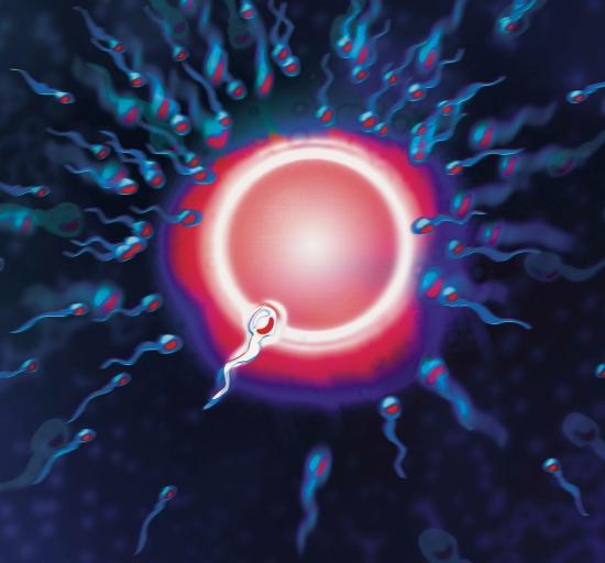 skolko-zreyut-spermatozoidi-dlya-eko