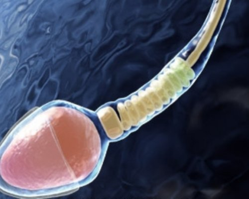 na-kakoy-den-sdavat-spermogrammu