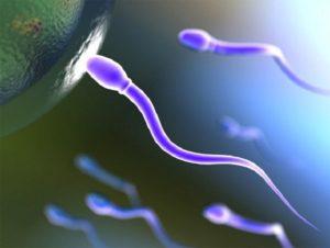 Сперматозоид достигший яйцеклетки