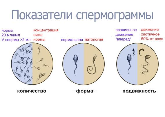 lekarstva-dlya-povisheniya-podvizhnosti-spermatozoidov